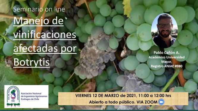 """Seminario on line """"Manejo de Vinificaciones afectadas por botrytis"""""""